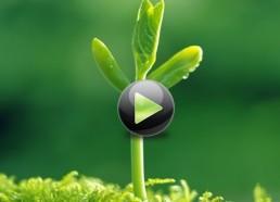 Использование микробиологических препаратов при производстве продукции в органическом земледелии